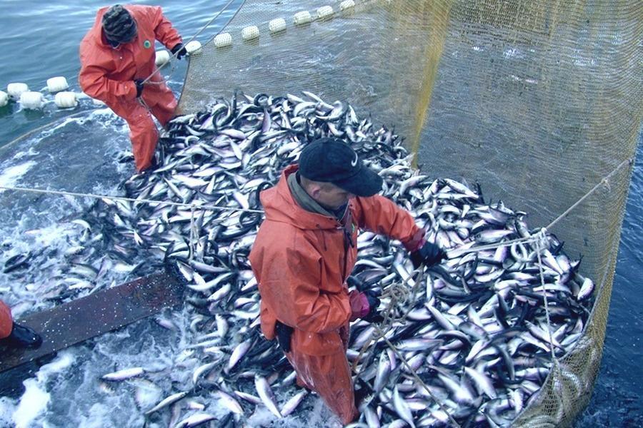 Конкурс по рыбопромысловым участкам