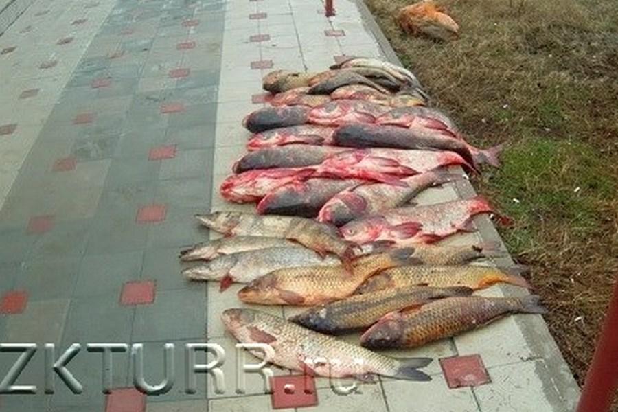 главкут рыболовная база в дагестане